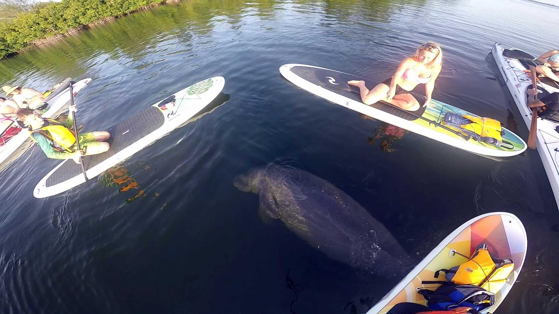 paddleboard-blog