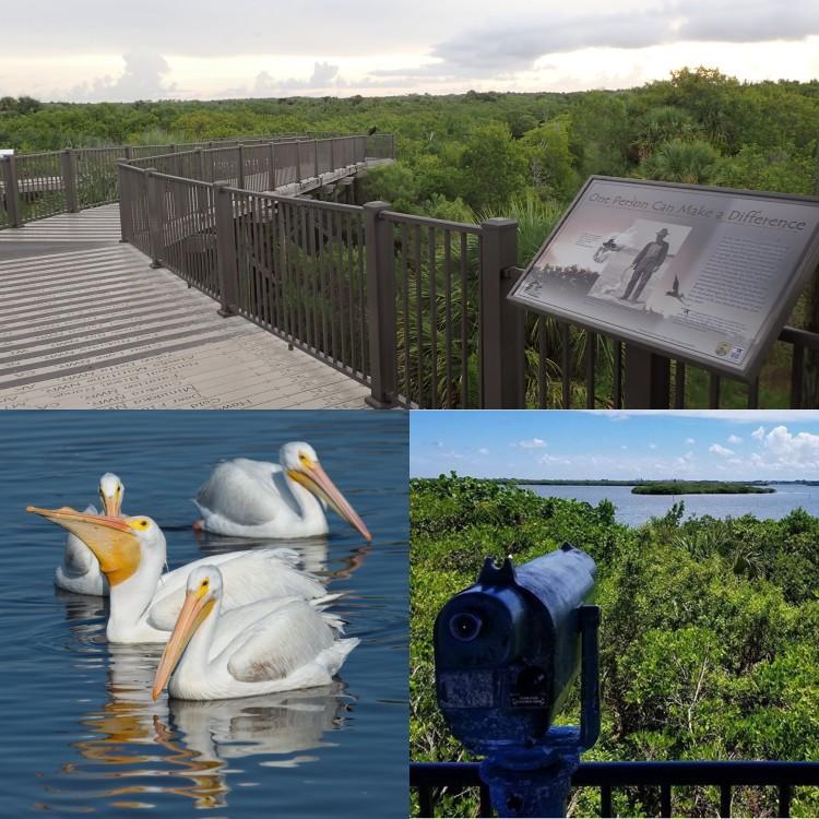 pelican island 4