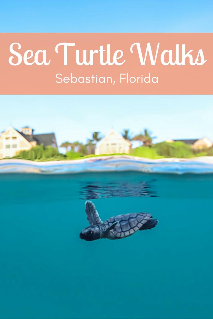 Watch Sea Turtles Nest on the Shores of Sebastian, Florida