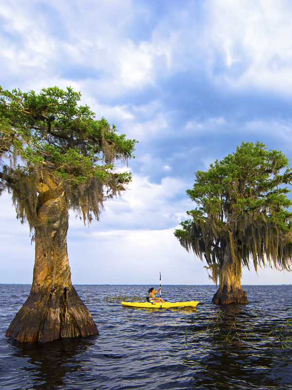 Sel_Cypress_trees-(ZF-5262-37575-1-002)
